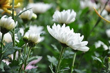 新栽花卉苗木的养护注意事项